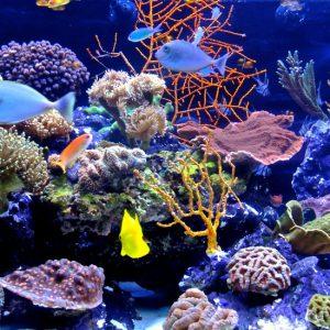 corals-gallery-03