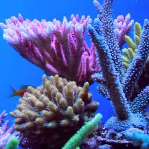 corals-gallery-04
