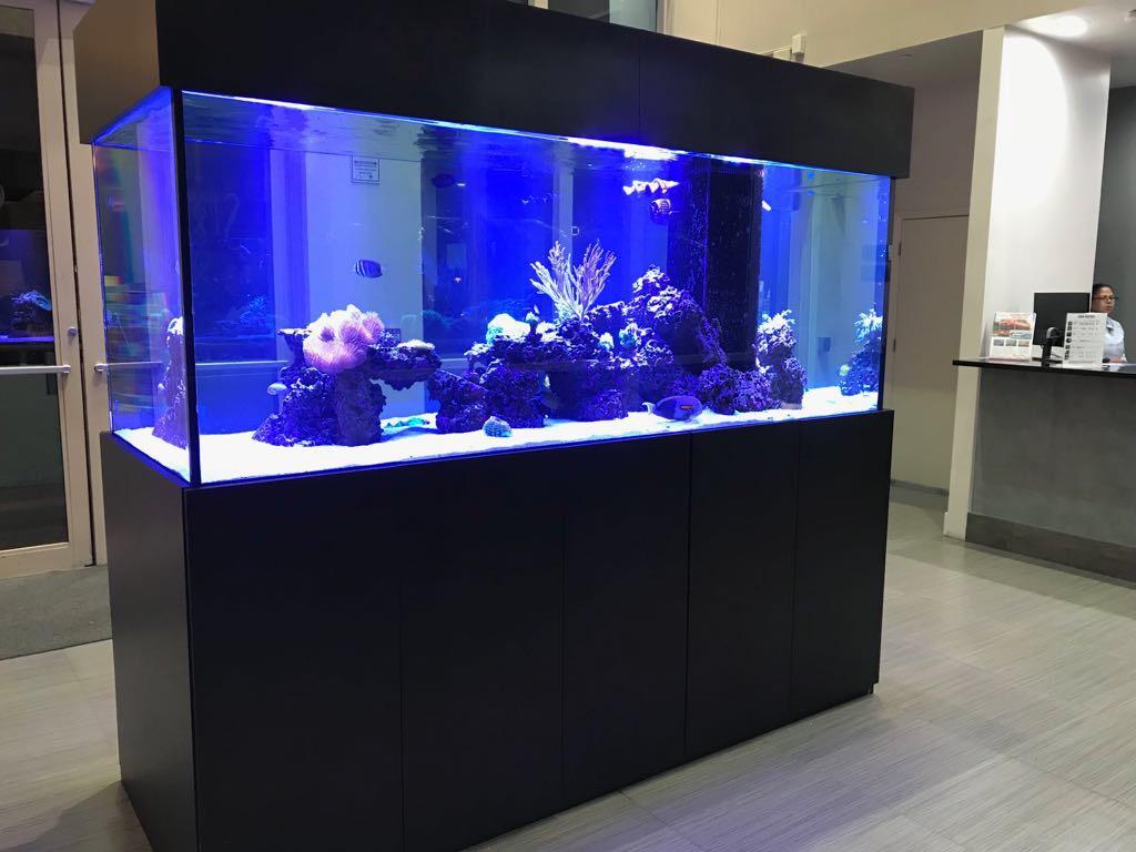 custom-aquarium-30