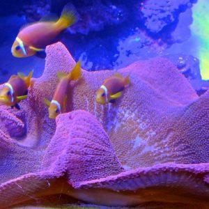 gallery-fish-06